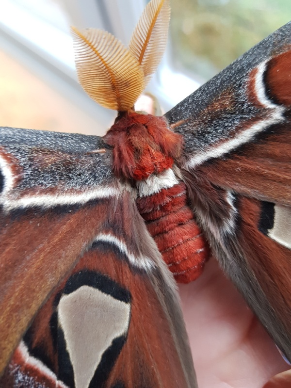 Выведение бабочек
