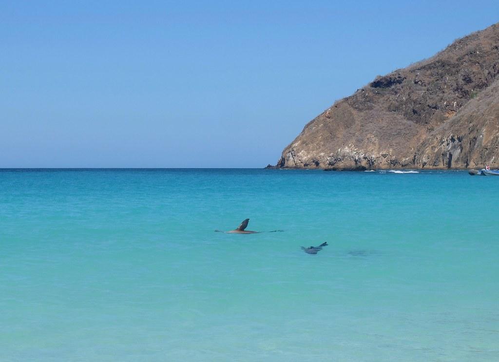 Галапагосский пляжинг.