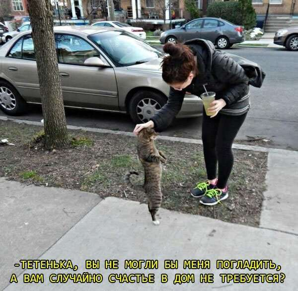 Подборка картинок с котами и про котов интересное