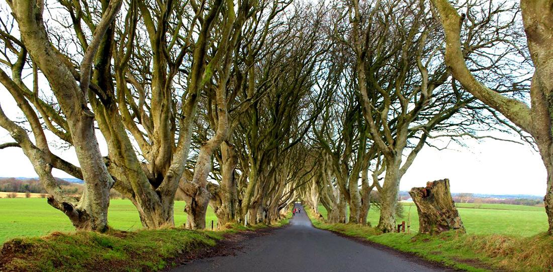 Дарк Хеджес: мистическая буковая аллея в Северной Ирландии виза