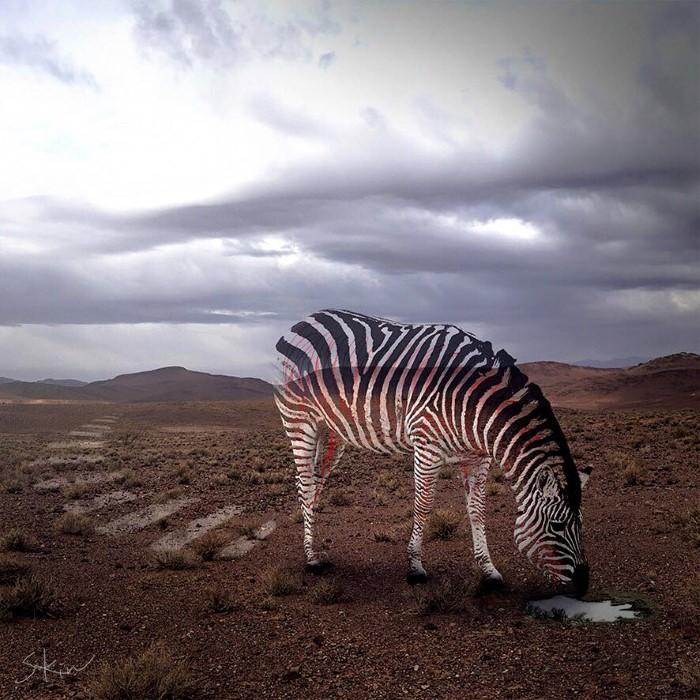 Сюрреалистические произведения Steven Kin фотошоп
