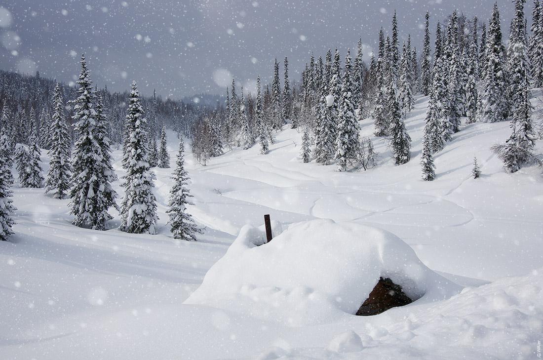 Эх, красоту наблюдаем какую Нашей волшебной русской зимы! природа