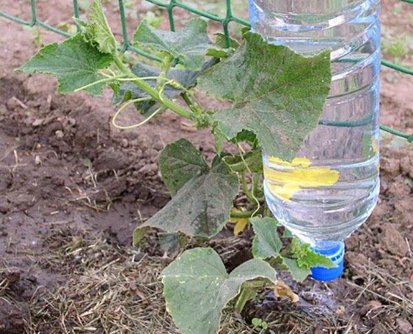 Способы применения пластиковых бутылок на современной даче идеи
