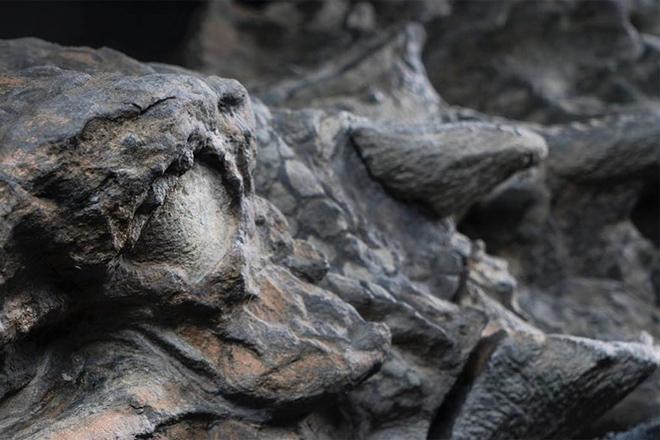 Шахтеры достали нечто — ученые были в шоке! динозавр