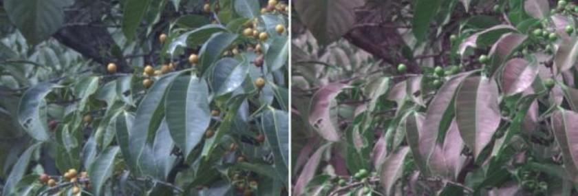 Уникальная камера позволяет видеть мир глазами птицы гаджеты