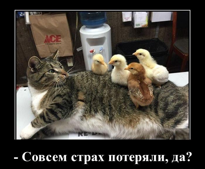 Прикольные и веселые котики в демотиваторах для позитива