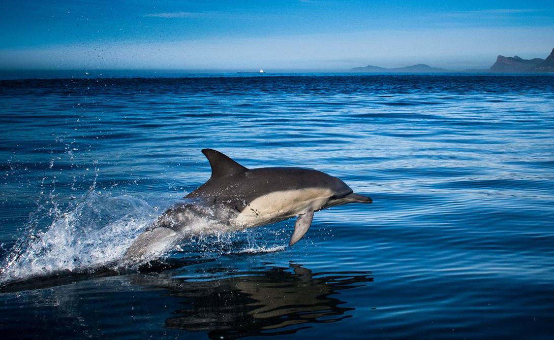 Темная сторона дельфинов акулы