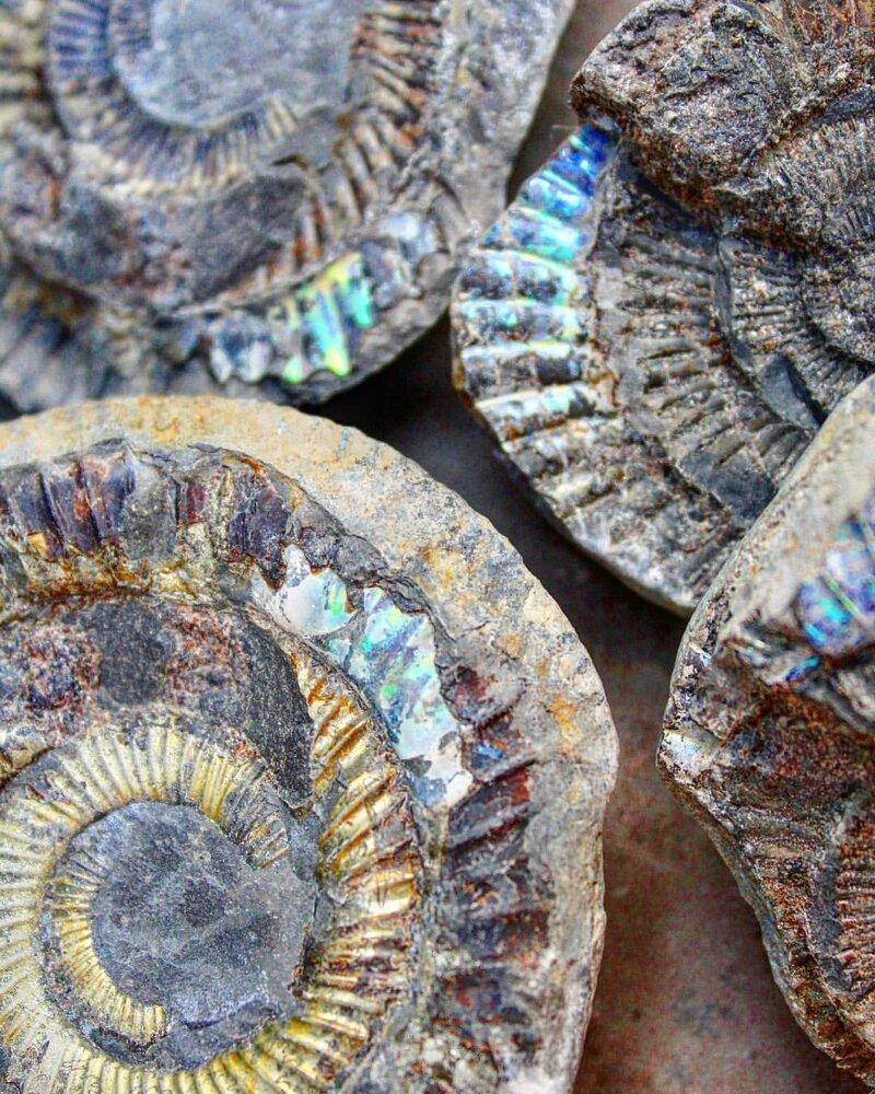 Невероятные находки на берегу моря