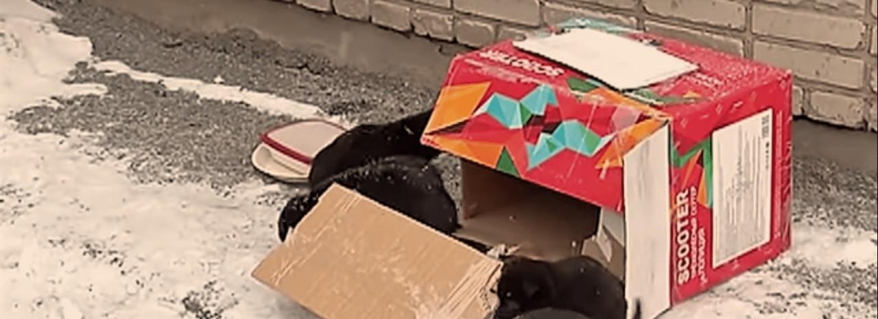 «Что-то странное на рельсах!» Машинист не ожидал увидеть там брошенных щенков собаки